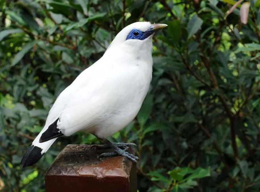 HK_bird_web
