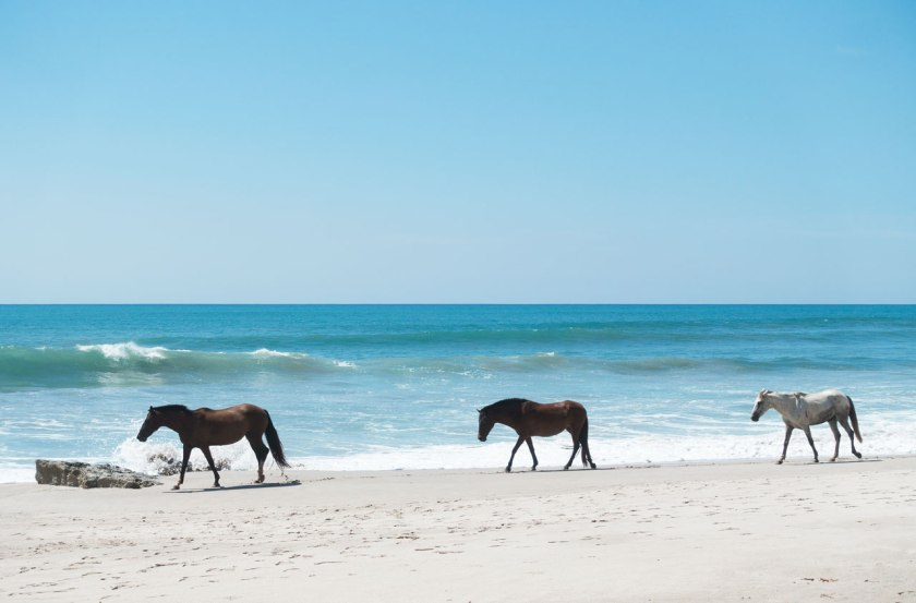 horsesonbeach_web