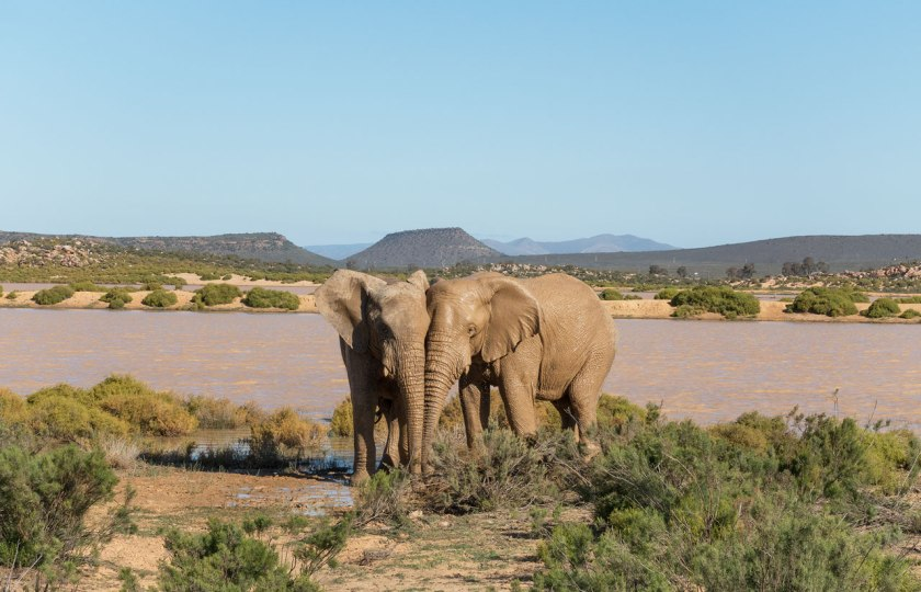 Safari_elephants_50